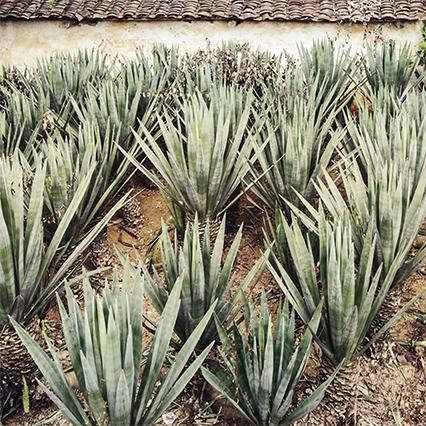 Raw materials: vegetable fibres with Sisal (agave)
